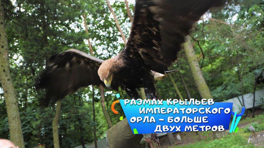 Навигатор. Новости. Выпуск 384
